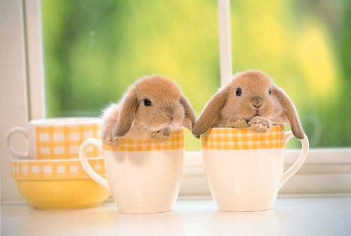 bunnycups