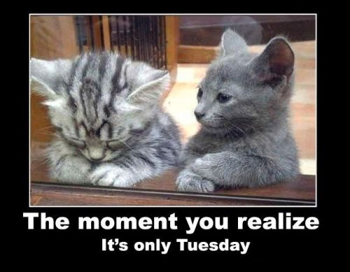 tuesday-kittens